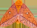 :moth: